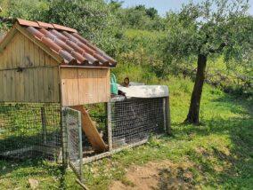 """Castelli Calepio: Ladri di galline in azione, il proprietario: """"Ho le immagini del furto"""""""